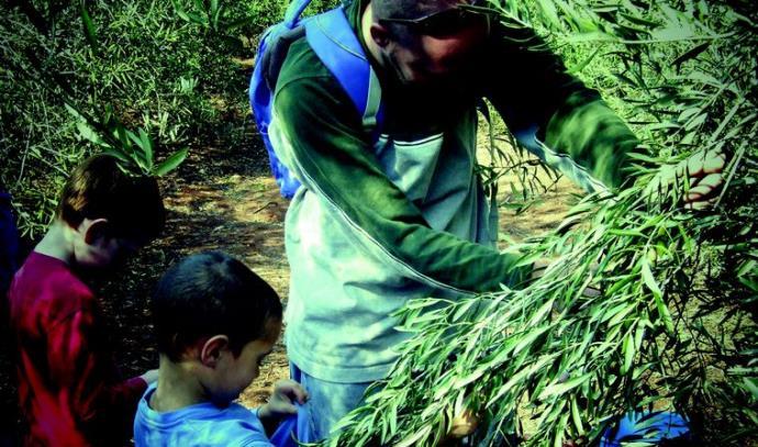 מסיק זיתים, תיירות בגולן