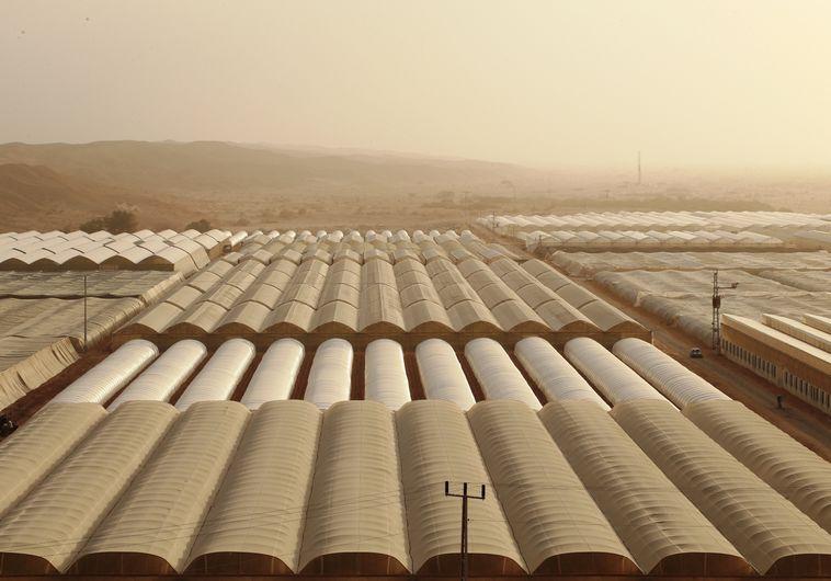 תורמת לנזק. חקלאות תעשייתית בדרום הארץ. צילום: מירי צחי