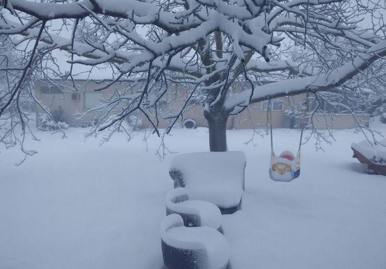 שלג באלוני הבשן. צילום: יסכה דקל