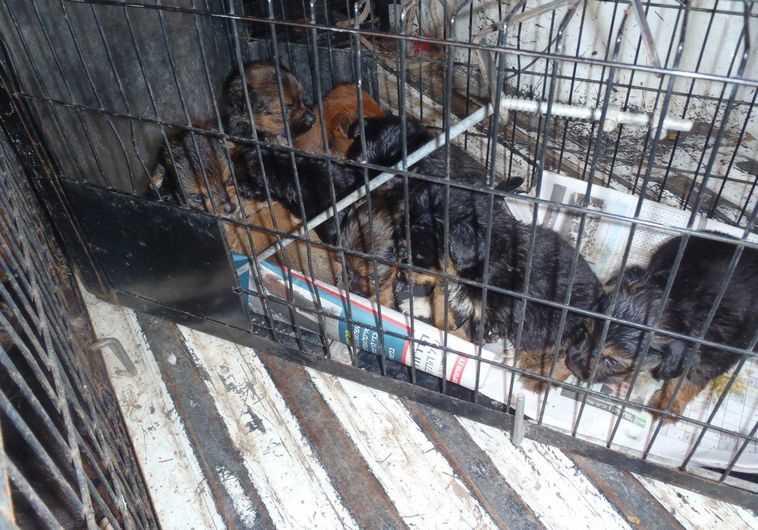 הכלבים שנמצאו בדירה