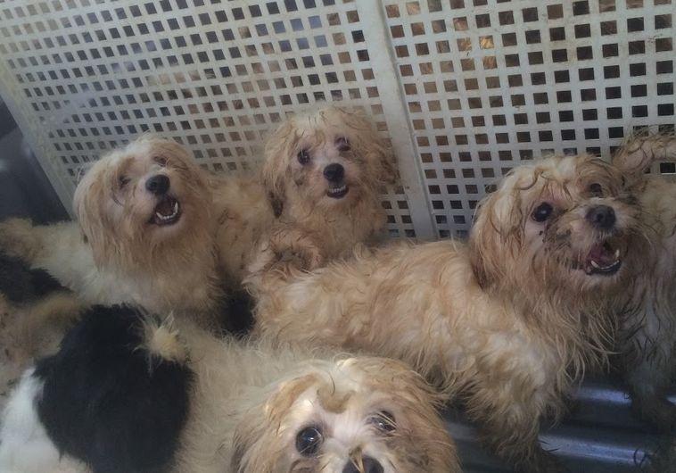 כלבים שנמצאו במחסן בחדרה