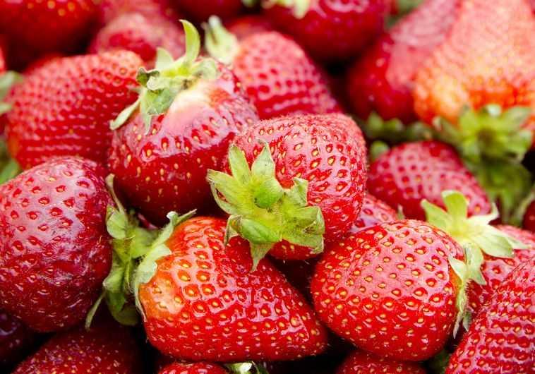 תותים (צילום: אינגאימג)