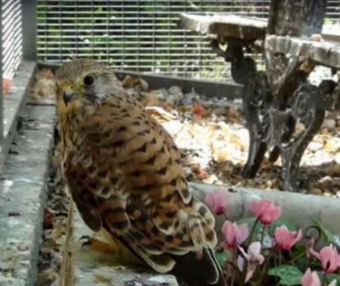 הציפורים המוגנות שהועמדו למכירה