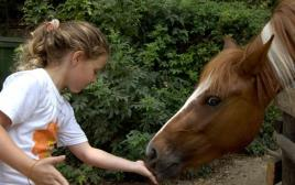 סוס בספארי