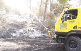 יער אשתאול לאחר השריפה