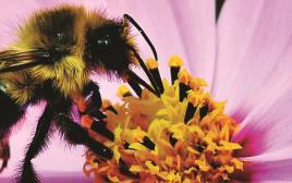 דבורים, דבש