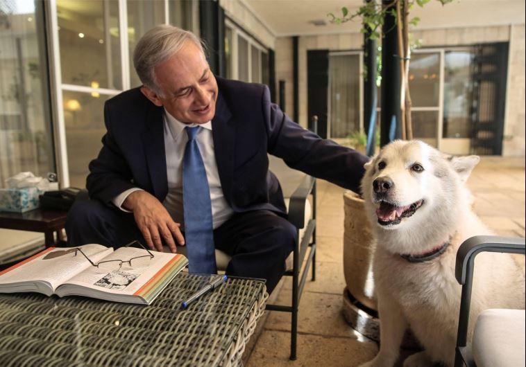 ראש הממשלה בנימין נתניהו והכלבה קאיה