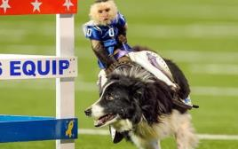 קוף רוכב על כלב