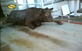 התעללות בבעלי חיים