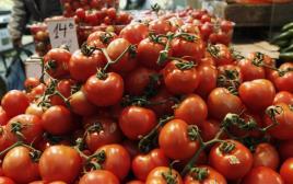 עגבניות, עגבנייה