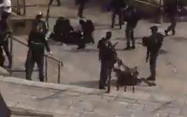 פיגוע דקירה בשער שכם בירושלים