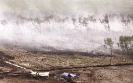 שריפה באינדונזיה