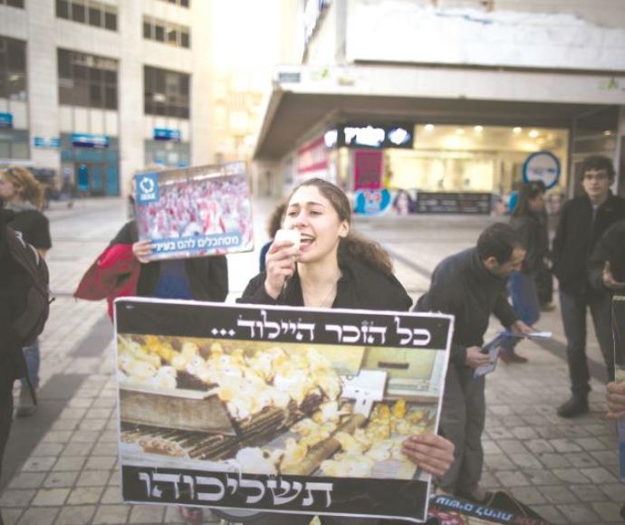 הפגנה נגדת השמדת אפרוחים