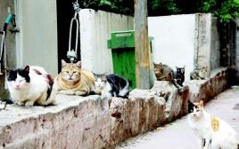 חתולי רחוב