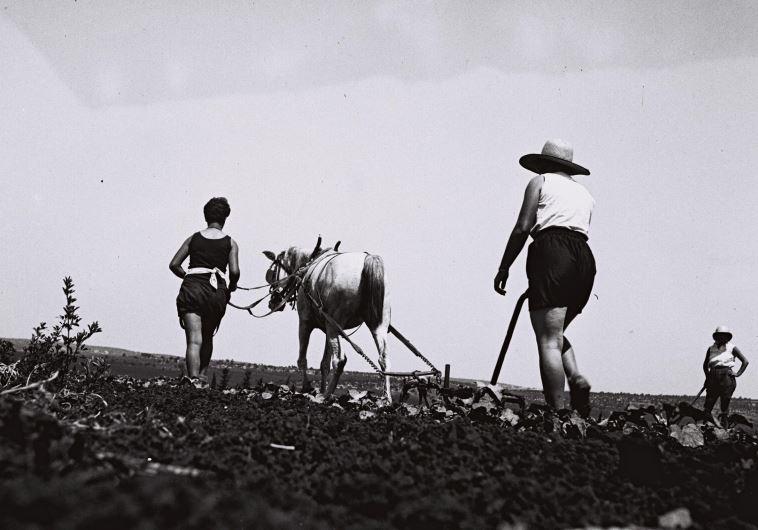 חברי קיבוץ עין חרוד עובדים בשדה