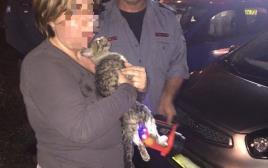 לוחמי האש מחלצים חתולה