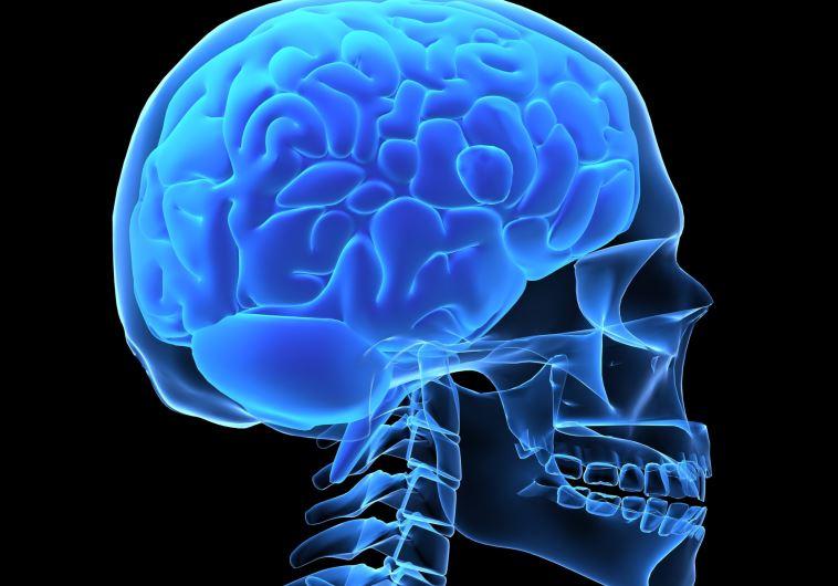 מוח, גולגולת, המוח האנושי