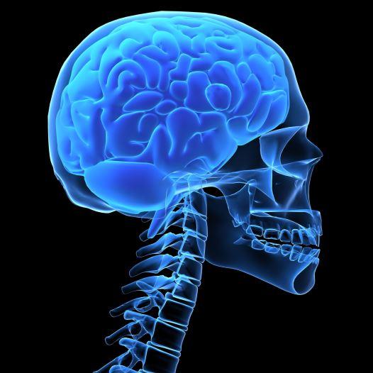 מוח, גולגולת, המוח האנושי (צילום: ingimage/ASAP)