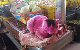 החתול שעבר התעללות ונצבע