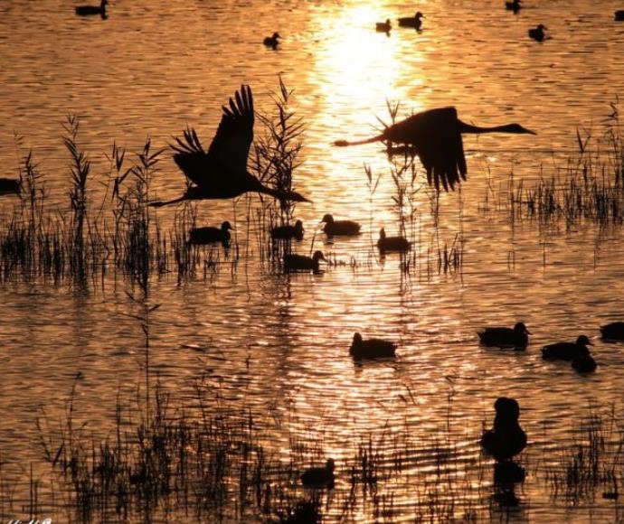 צילומי טבע של ציפורים