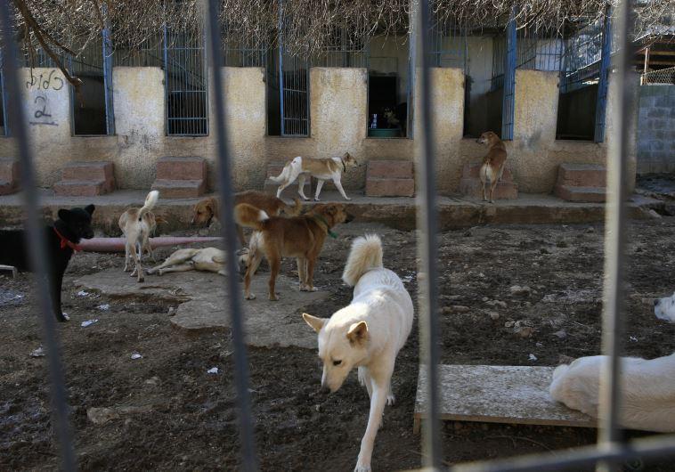 כלבים במקלט ליד ירושלים