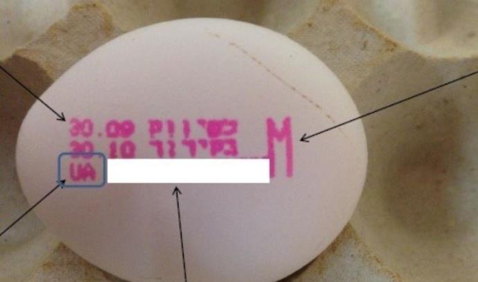 ביצים מאוקראינה שנאסרו לשימוש בשל סלמונלה