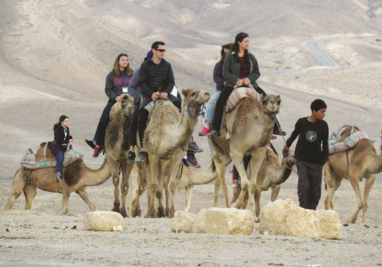 טיול גמלים, כפר הנוקדים. צילום: מיטל שרעבי