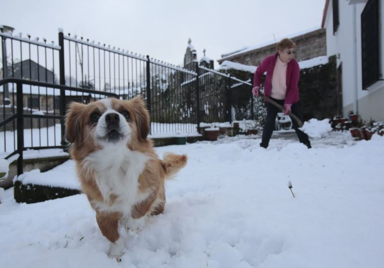כלב בשלג