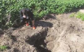 השמדת כלבים בבית שאן
