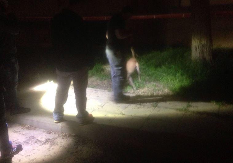 זירת הרצח בבאר שבע. צילום: דוברות המשטרה