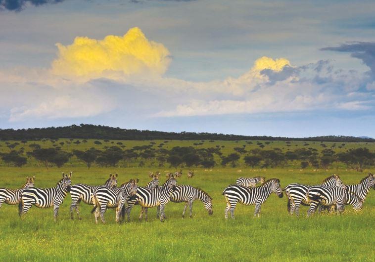 שמורת טבע באפריקה. צילום: כרמל תיירות