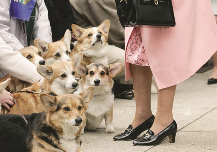 אוהבת במיוחד כלבים מגזע וולש קורגי. המלכה אליזבת. צילום: רויטרס
