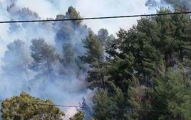שריפה ביער ביריה