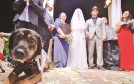 עמית ואמלי ארנון בחופה עם הכלבה לקי. טרנדים בחתונות