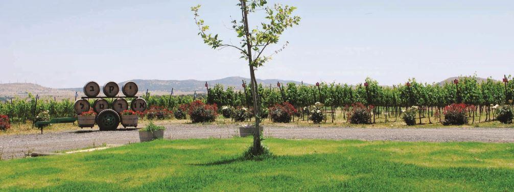 רחבת יקב אורטל (צילום: מיטל שרעבי)
