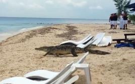תנין באי קוזומל