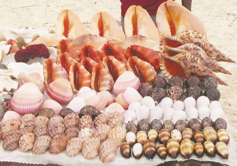 אלמוגים. צילום: קרני אלדד