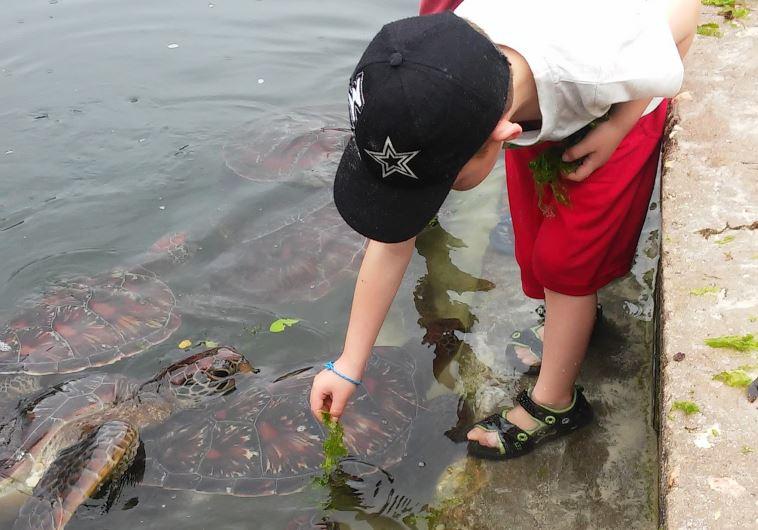 צבים ענקיים. צילום: קרני אלדד
