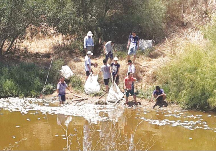 איסוף פגרי הדגים מנחל הירקון