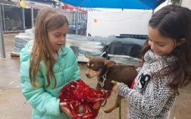 משלוחי מנות לכלבים בכלבייה עירונית