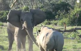פיל וקרנף