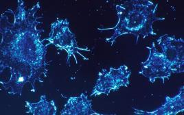 תאי סרטן. טיפול בהתאם למפה הגנומית של כל מטופל