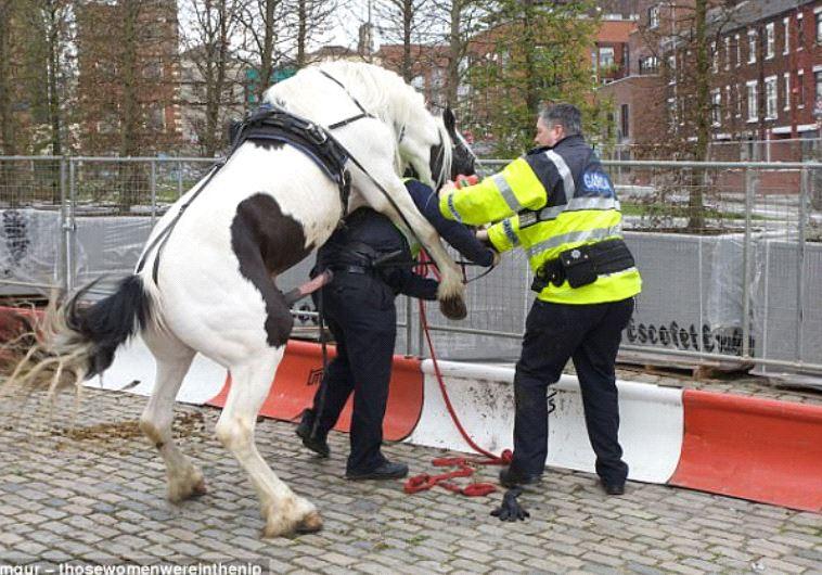 עבודה משטרתית למופת. צילום מסך
