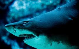 תקיפת כריש אימתני
