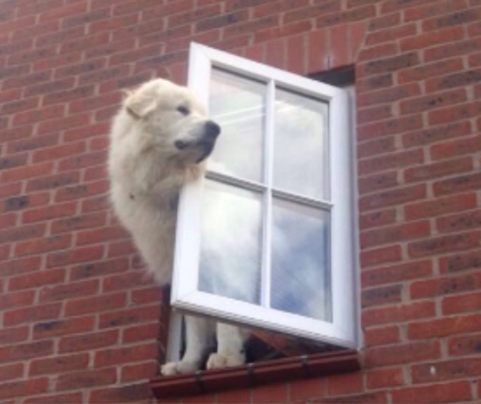 הסכנות בהשארת הכלב לבד בבית