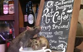 בית קפה עכברושים