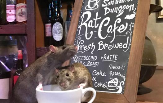בית קפה עכברושים (צילום: טוויטר)
