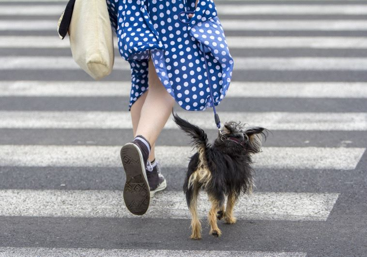 בעלי כלבים הולכים ביום 22 דקות יותר מהשאר. אינגאימג