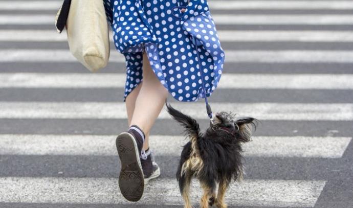אישה מטיילת עם כלב