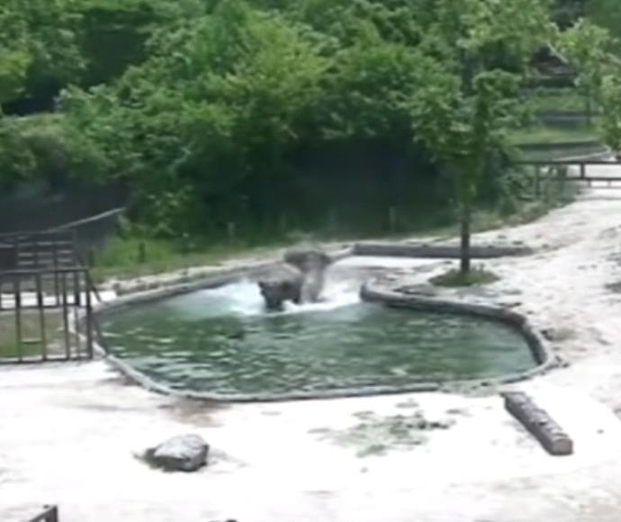 פילים נחלצים לעזרה